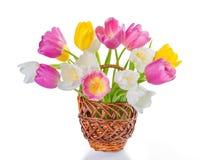 Tulpan blommar i den isolerade korgen Royaltyfri Foto