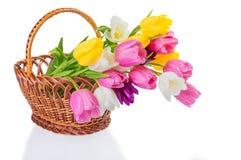 Tulpan blommar i en korg Royaltyfria Foton