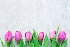 Tulpan blommar i rad på trätabellen för mars 8, Internatio Royaltyfria Foton