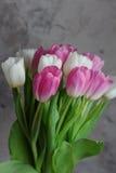 Tulpan blommar i vår Arkivbild