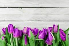Tulpan blommar på wood bakgrund Arkivbild
