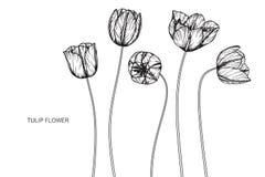 Tulpan blommar teckningen och skissar med linje-konst Fotografering för Bildbyråer