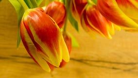 Tulpan blomstrar i röd-guling royaltyfri foto