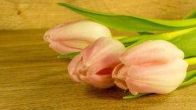 Tulpan blomstrar i röd-guling royaltyfria foton