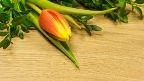 Tulpan blomstrar i röd-guling royaltyfri fotografi