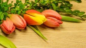 Tulpan blomstrar i röd-guling arkivfoto