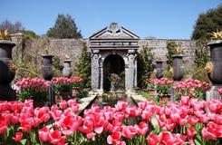 tulpan för arundel slottträdgård royaltyfri foto