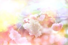 tulpan för fjäder för fokus för blomma för bakgrundskant avlägsen Royaltyfria Bilder