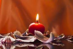 tulpan för petal s för stearinljus ett Royaltyfri Bild