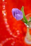 Tulpan fjädrar blomman i exponeringsglas Arkivbilder