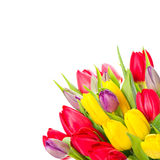 tulpan för fjäder för färgrika blommor för bukett ny Arkivbilder