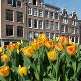Tulpan i Amsterdam, Nederländerna Royaltyfria Bilder