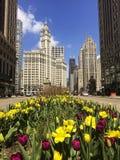 Tulpan i blom på den Michigan avenyn i Chicago Arkivfoto