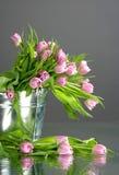 Tulpan i liten hink med reflexion Arkivfoto