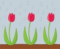 Tulpan i regna Arkivbild