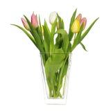 Tulpan i vase Royaltyfria Bilder