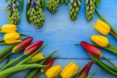 Tulpan och hyacinter Royaltyfri Bild
