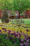 Tulpan- och penséblomsterrabatt i den George Washington University universitetsområdet Royaltyfri Foto