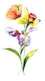 Tulpan- och pingstliljablommor Fotografering för Bildbyråer