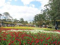 Tulpan på blommafestivalen Arkivfoto