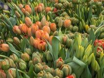 Tulpan på en blommamarknad Royaltyfri Foto