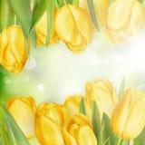 Tulpan på en suddig bakgrund 10 eps Arkivbild