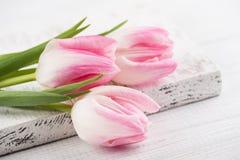 Tulpan på vitbakgrund Royaltyfri Fotografi
