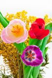 Tulpan som blommar i studiokvalitets8 mars Royaltyfri Bild