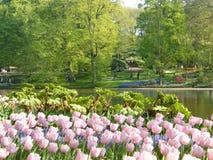 Tulpan trädgårds- sjö, Keukenhof, Nederländerna, nord av Europa Arkivbild