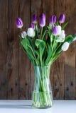 Tulpan - Ultraviolet Royaltyfria Foton