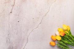 Tulpanblomma med begrepp för vår för bakgrund för vitt cement för spricka arkivfoton