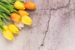 Tulpanblomma med begrepp för vår för bakgrund för vitt cement för spricka arkivfoto