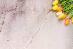 Tulpanblomma med begrepp för vår för bakgrund för vitt cement för spricka royaltyfri fotografi
