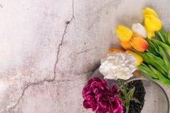 Tulpanblomman och den purpurfärgade nejlikan för vit på bakgrund för vitt cement för spricka fjädrar begrepp royaltyfri foto