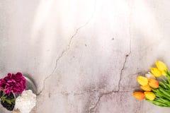 Tulpanblomman och den purpurfärgade nejlikan för vit på bakgrund för vitt cement för spricka fjädrar begrepp arkivbilder