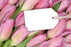 Tulpanblommor i vår- eller moders dag med den tomma etiketten och kopian royaltyfri fotografi
