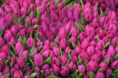 TULPANBLOMMOR SOM ÄR TILL SALU PÅ FLOWERSHOP Royaltyfri Fotografi