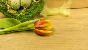 Tulpanblomning med påskgarnering royaltyfri fotografi