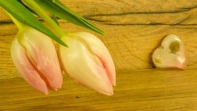 Tulpanbukett i rosa färger royaltyfria bilder