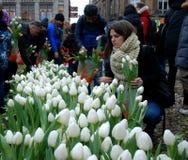 Tulpandag i Amsterdam Fotografering för Bildbyråer