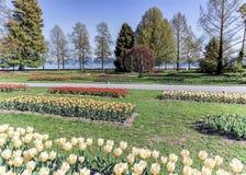 Tulpanfestmåltid, Morges, Schweiz Royaltyfri Foto
