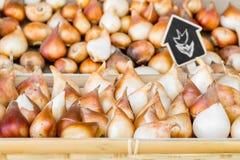 Tulpankulor som lagras i askarna med rengjorda och förberedda kulor för etikett, för att plantera Arkivbilder