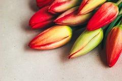 Tulpanvårblommor Nya tulpanväxter på tappningbakgrund Bygdnatur Vårfoto, inbjudan, vykort Royaltyfri Bild
