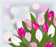 Tulpe stock abbildung