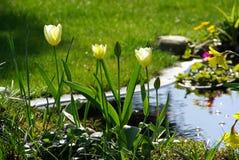 Tulpe 6 Lizenzfreie Stockfotos