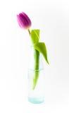 Tulpe auf Weiß Stockfoto
