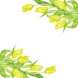 Tulpe blüht Rahmengrußkarte Frühlings-Aquarelldekorillustration vektor abbildung
