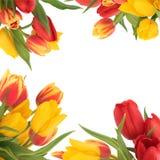 Tulpe-Blumen-Rand stockfoto