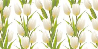 Tulpe, Blumenhintergrund, nahtloses Muster. Lizenzfreies Stockbild