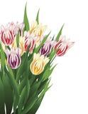 Tulpe-Blumenstrauß Lizenzfreies Stockfoto